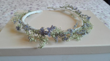 corona paniculata y limonium